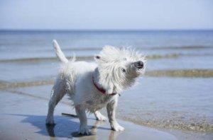 Ferienhaus Rügen mit Hund