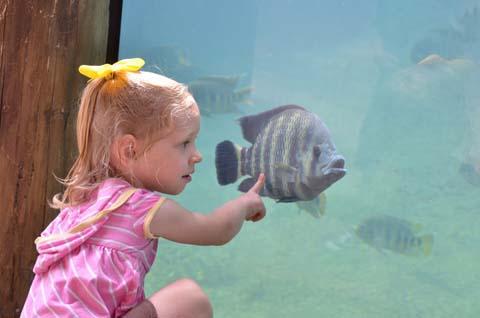 Aquarium Ozeanium Stralsund